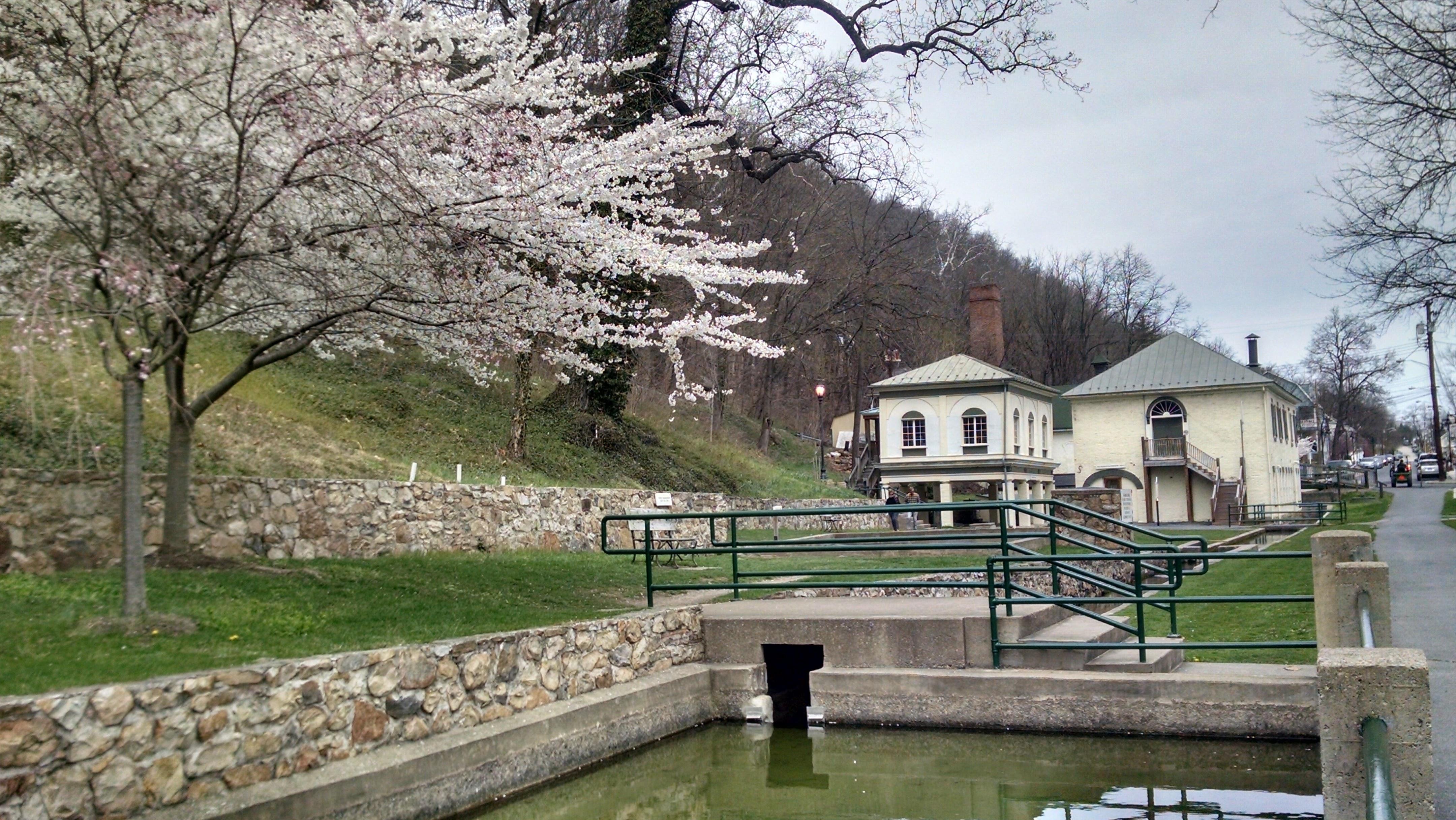 Spring trees in bloom at Berkeley Springs State Park, WV