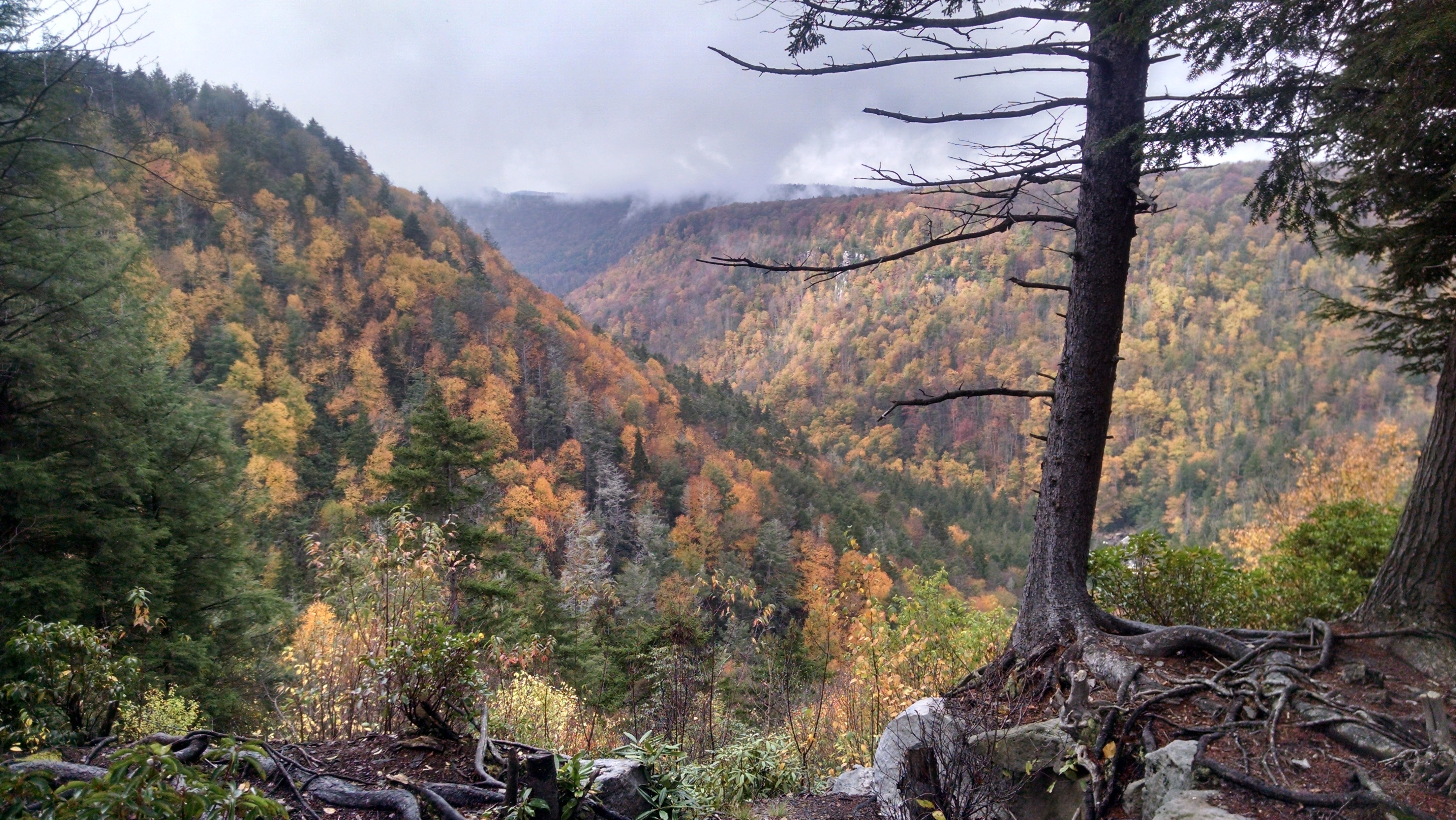 Overlook at Blackwater Canyon in fall foliage
