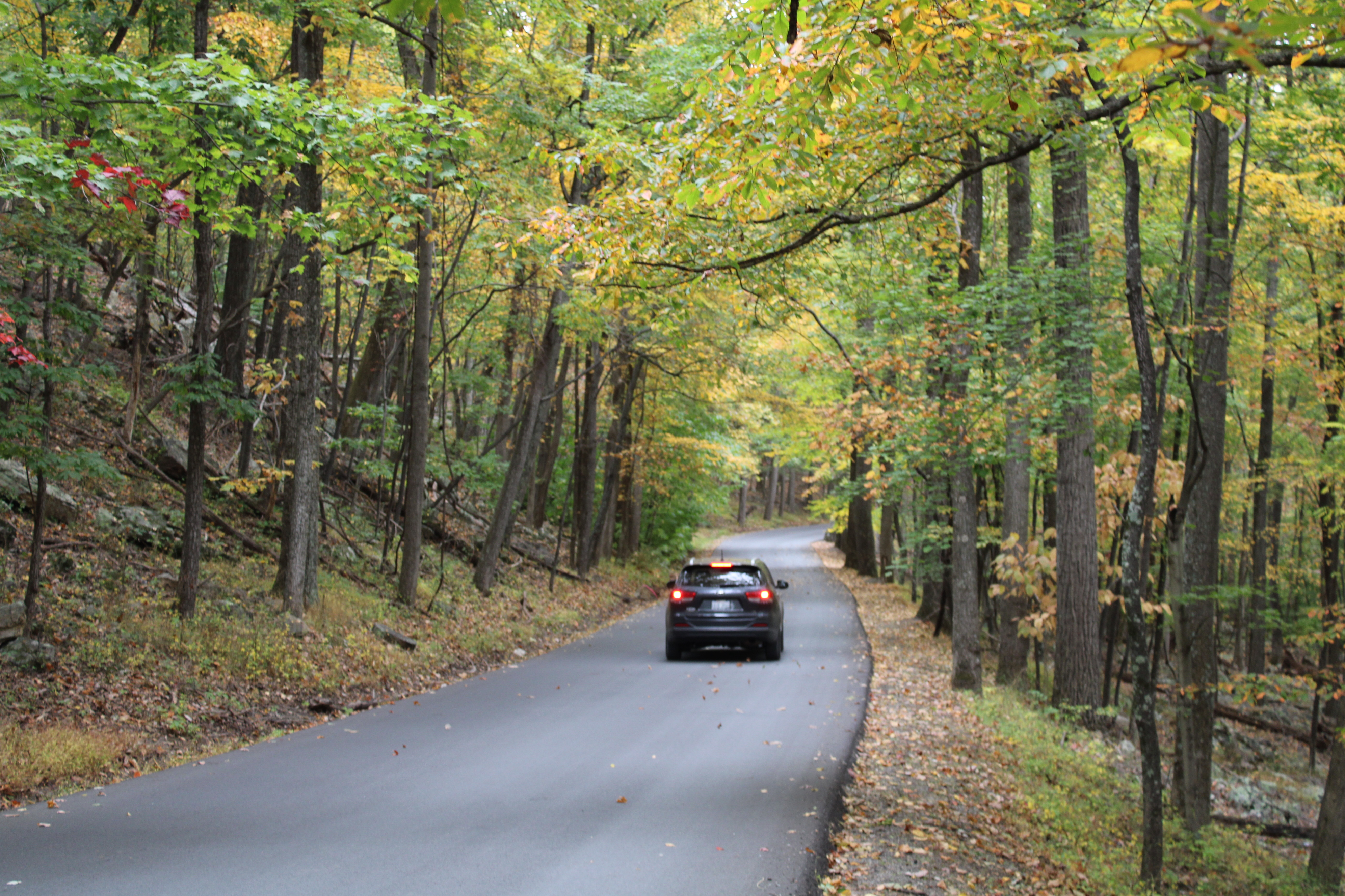 Road in Cacapon State Park in fall