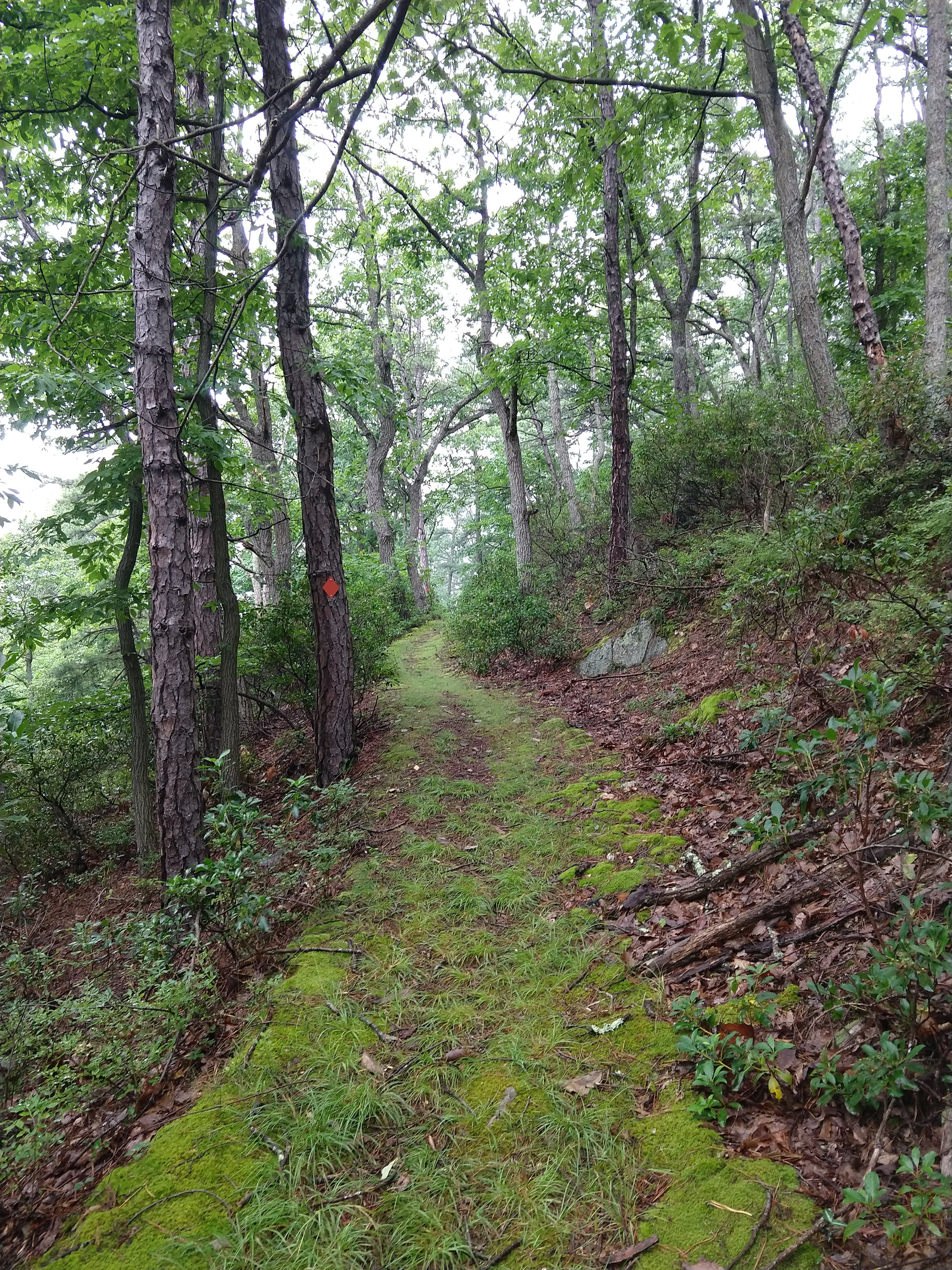 Red trail at Lost River State Park