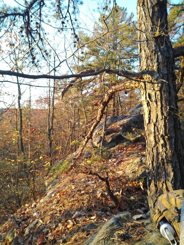 Woods on Middle Ridge in Sleepy Creek WMA